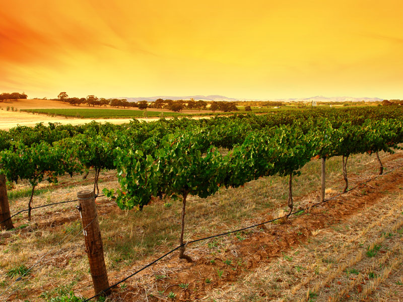Barossa-Valley.jpg